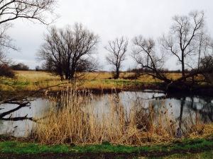 Wanderung an der Oder